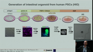 From organoid to artificial organ - September 22nd, 2020